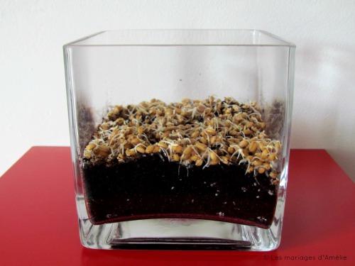 Jour 3: Les graines ont germé.